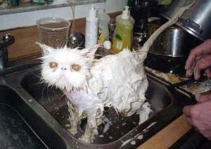 wet-cat01