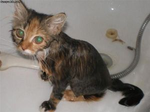 Wet_Cat_Is_Pissed