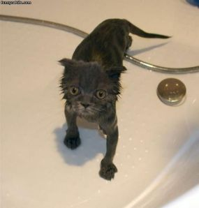 Wet_Scared_Cat